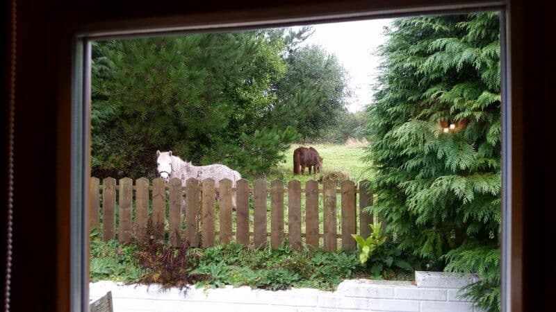 Morning View - Ponies