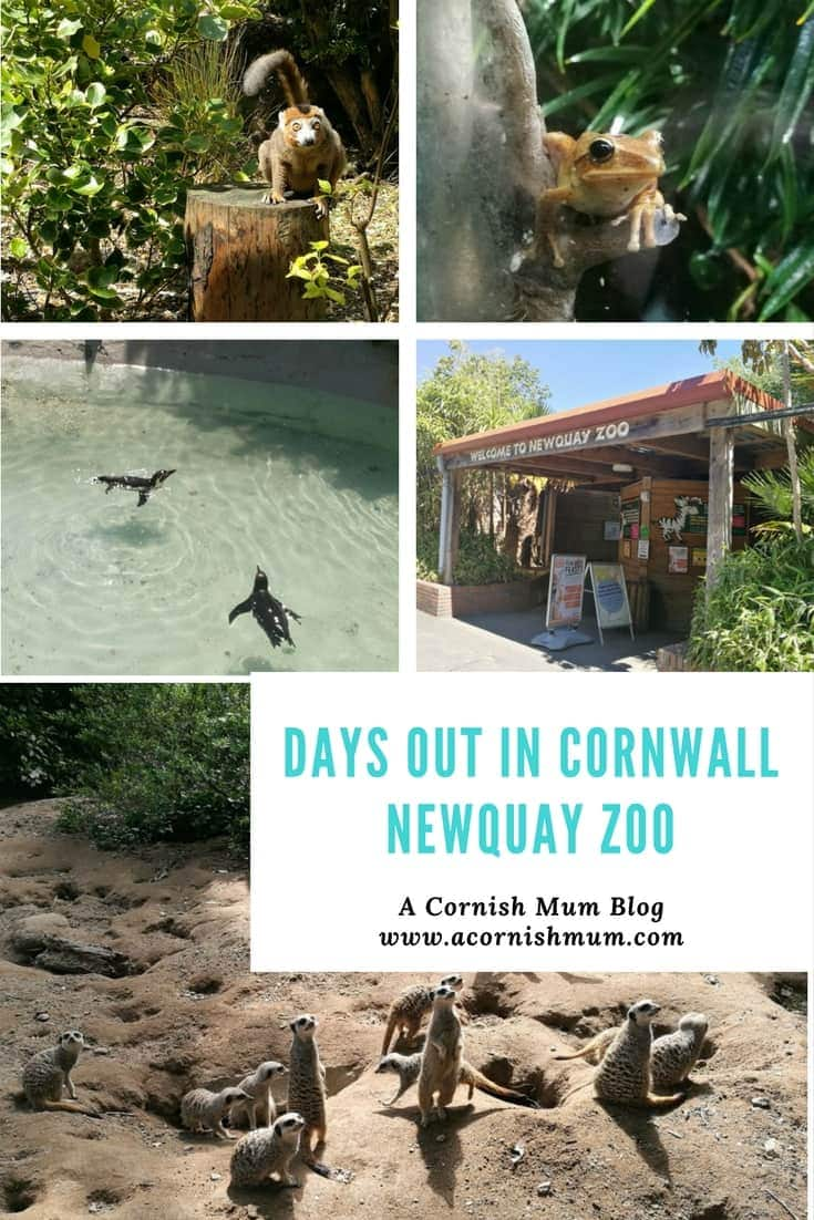 Newquay Zoo - Cornwall