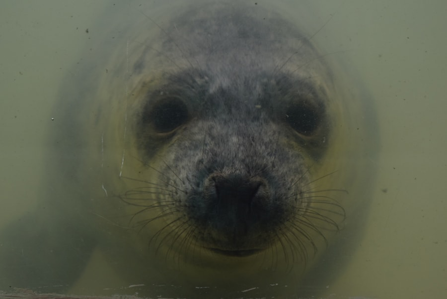 Seal pup close up behind the glass in the water