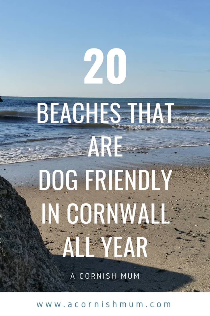 20 dog friendly beaches in Cornwall all year round