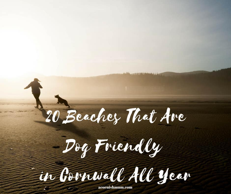 20 Beaches in Cornwall That are Dog Friendly All Year