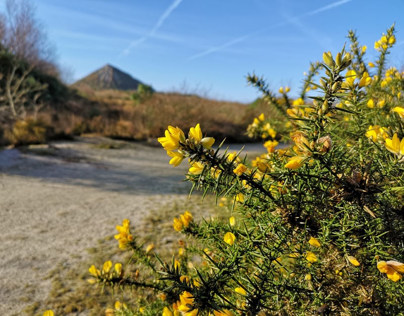 Gorse and blue skies - geocaching